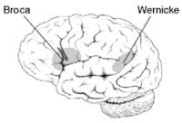 Brain pic Brocas and Wernickes areas